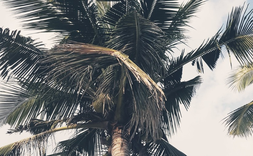 Coconut Tree- #Poem #Poetry