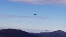 Vultures across the Pyrenees